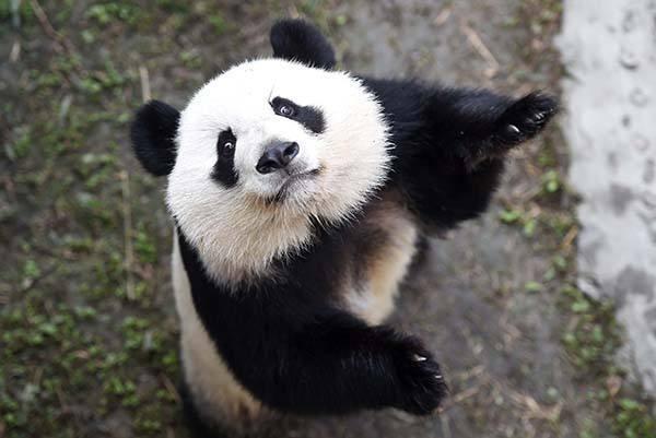 《惟乐高效英语》第一册,Panda的英国校园生活